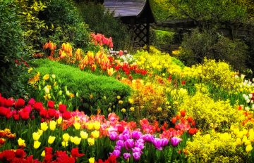 Daftar Taman Bunga di Kota Batu yang Bikin Hati Jadi Berbunga-Bunga