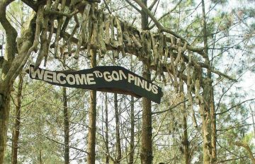 Keindahan Hutan Pinus yang Siap Manjakan Para Photo Hunter!